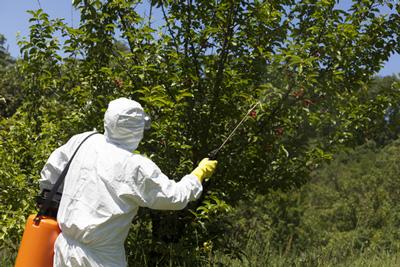 Phân tích về sự ảnh hưởng cao của các loại thuốc trừ sâu trong các mẫu thực phẩm