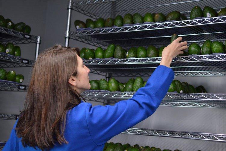 Lớp phủ thần kỳ - xịt lên hoa quả và nó sẽ có hạn sử dụng lâu gấp 5 lần