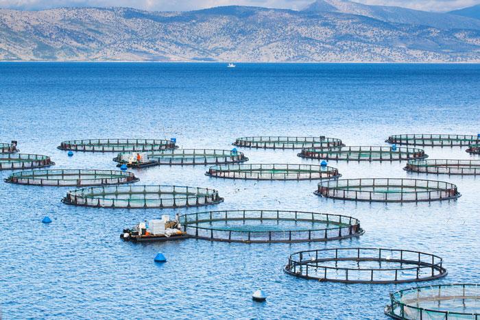 Bột cá có phải là nguyên nhân làm tăng khả năng kháng thuốc kháng sinh hay không?