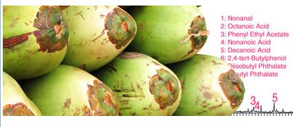 Phân tích định tính các sản phẩm nước dừa bằng cách sử dụng chiết xuất Sorotive Stir Bar kết hợp với giải hấp thu nhiệt-GC / MS