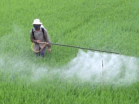 Các phương pháp phân tích giúp phát hiện thuốc trừ sâu giả