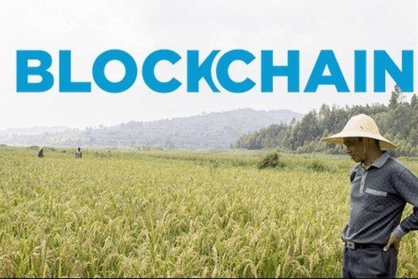 Ứng dụng Blockchain vào nông nghiệp tại Việt Nam: Nâng cao tăng trưởng